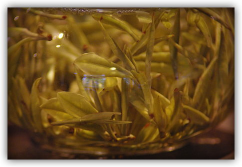 detail of leaf steeping in glass pot